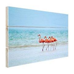 Flamingo's