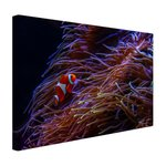 Nemo clown vis bij koraal - Canvas