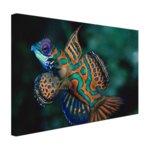 Veelkleurige vis - Canvas