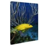 Gele kegelvis bij het rif - Canvas