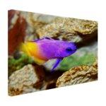 Paars-gele vis onder water - Canvas