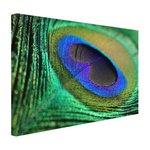 Pauwenveer blauw groen - Canvas