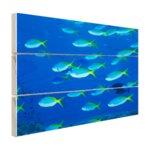 School van geelrugvissen - Hout