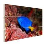 Exotische vis bij rood koraal - Hout