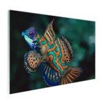 Veelkleurige vis - Plexiglas