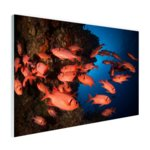 Oranje vissen in koraalrif - Plexiglas