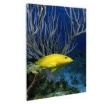Gele kegelvis bij het rif - Plexiglas