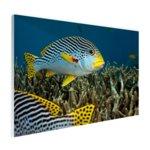 Vis met diagonale strepen - Plexiglas