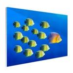 School tropische vissen - Plexiglas