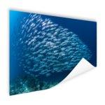 School met vissen - Poster