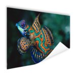 Veelkleurige vis - Poster
