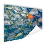 Vis zwemt in tegengestelde richting - Poster