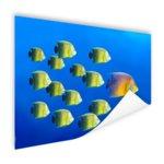 School tropische vissen - Poster