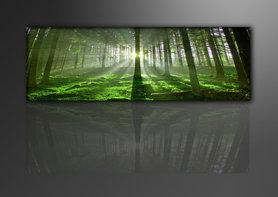 Bos - Canvas Schilderij Panorama 120 x 40 cm