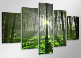 Bos - Canvas Schilderij Vijfluik 100 x 50 cm