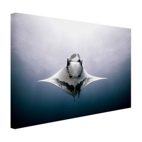 Onderaanzicht mantarog in de oceaan - Canvas