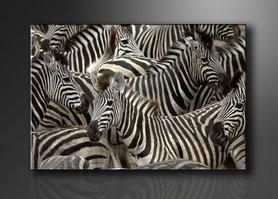 Zebra - Canvas Schilderij 120 x 80 cm