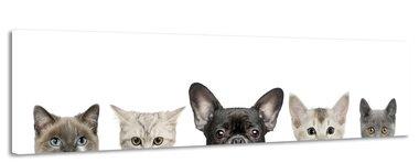Huisdieren - Canvas Schilderij Panorama 118 x 36 cm