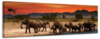 Olifanten - Canvas Schilderij Panorama 118 x 36 cm