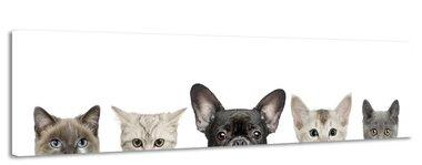 Huisdieren - Canvas Schilderij Panorama 158 x 46 cm