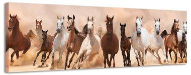 Wilde paarden - Canvas Schilderij Panorama 158 x 46 cm