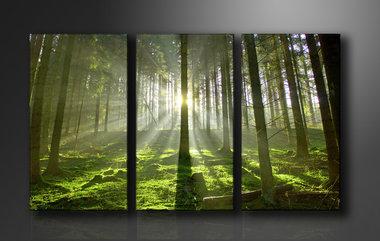 Bomen - Canvas Schilderij Drieluik 160 x 90 cm
