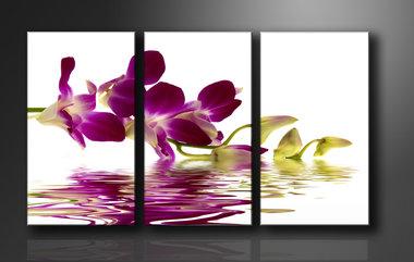 Orchidee - Canvas Schilderij Drieluik 160 x 90 cm