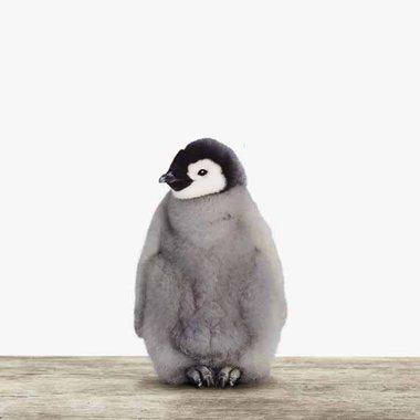 Canvas Baby Pinguin