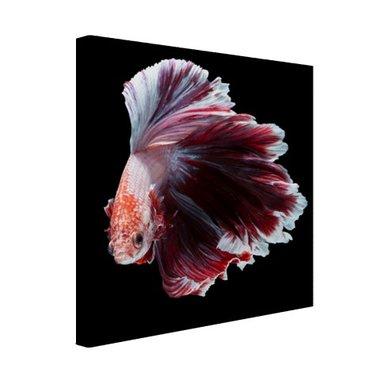 Sierlijke vis zwarte achtergrond - Canvas