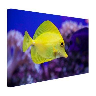 Knalgele vis in koraalrif - Canvas