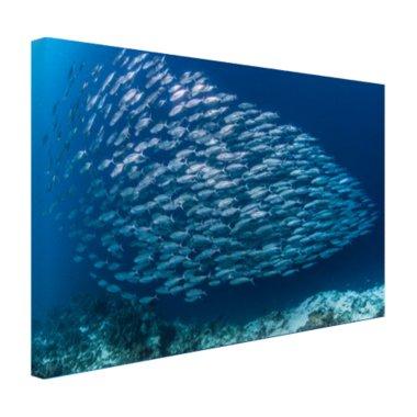 School met vissen - Canvas