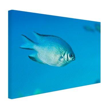 Blauw-grijze vis - Canvas