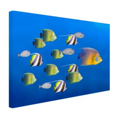 Grote vis leider van tropische vissen - Canvas