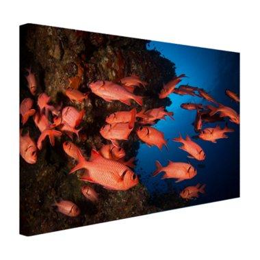 Oranje vissen in koraalrif - Canvas