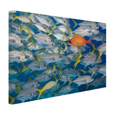 Vis zwemt in tegengestelde richting - Canvas
