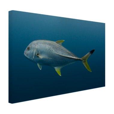 Grote vis onder water - Canvas