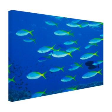 School van geelrugvissen - Canvas