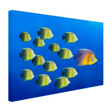School tropische vissen - Canvas