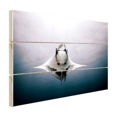Onderaanzicht mantarog in de oceaan - Hout
