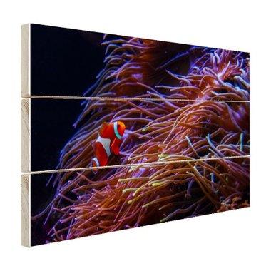 Nemo clown vis bij koraal - Hout