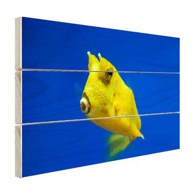 Gele gehoornde kogelvis onder water - Hout
