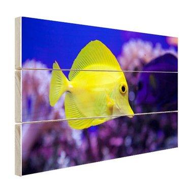 Knalgele vis in koraalrif - Hout