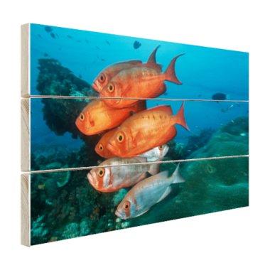 Rode en grijze vissen bij Zuid-Afrika - Hout