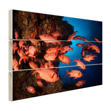 Oranje vissen in koraalrif - Hout