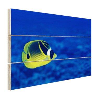 Wasbeer vlindervis onderwaterzicht - Hout