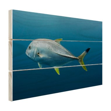Grote vis onder water - Hout