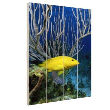 Gele kegelvis bij het rif - Hout