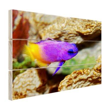 Paars-gele vis onder water - Hout