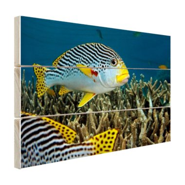Vis met diagonale strepen - Hout