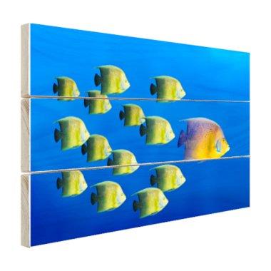 School tropische vissen - Hout